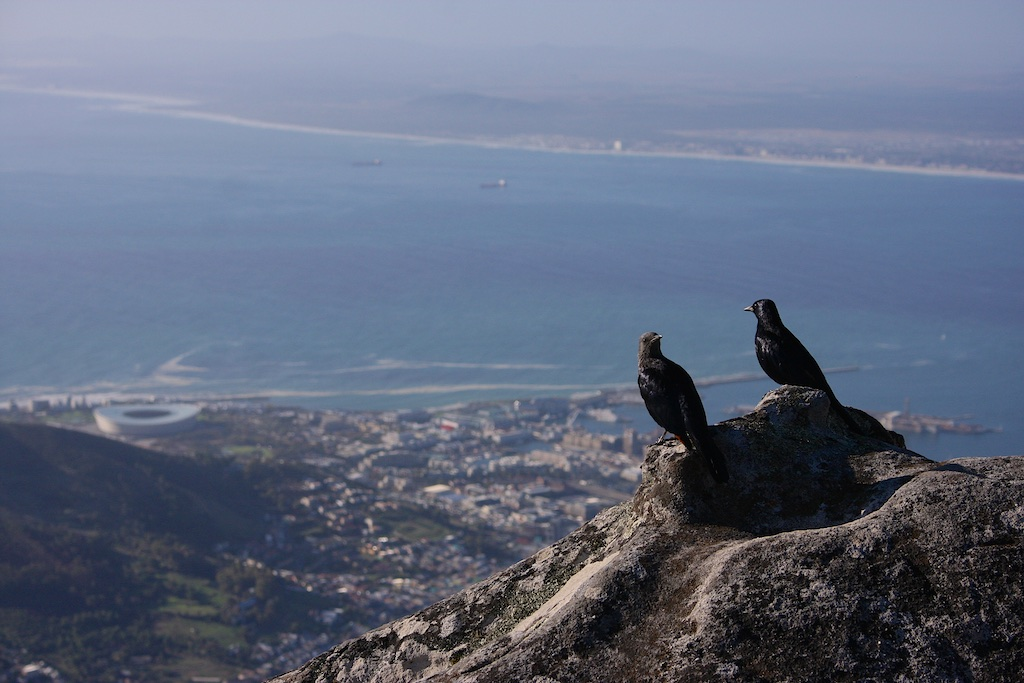 Table Mountain 8